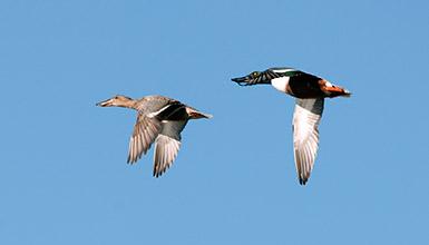 Birding Euskadi