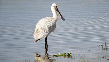 Fünf Schwerpunkte von Birding Euskadi