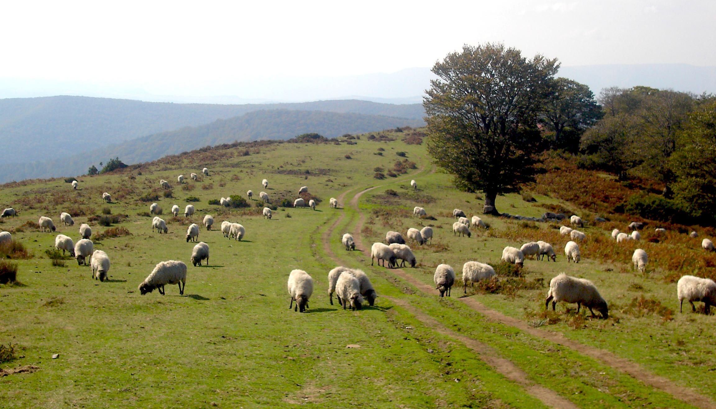 Parques naturales parque natural de gorbeia espacios for Piscinas naturales pais vasco